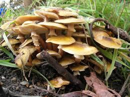wild mushroom image