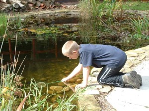 child dipping into pond to catch insects