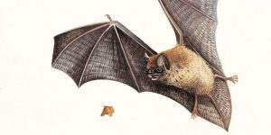 image of bat with with outstretched wings