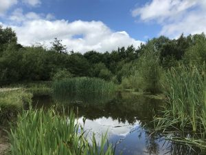 image of pond